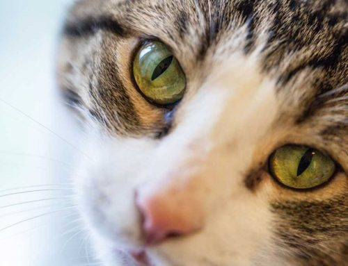 Happy Tails Newsletter: June, 2021